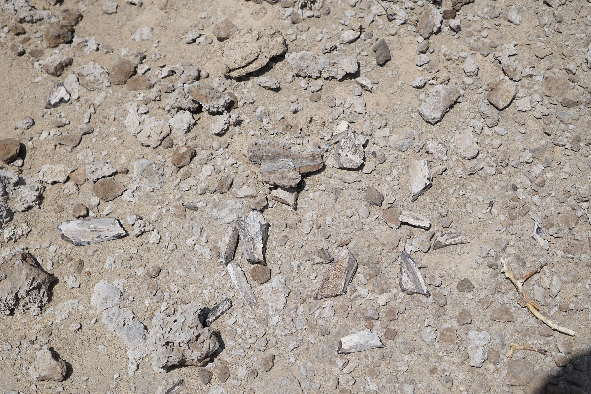 fossil bones found during ground truthing
