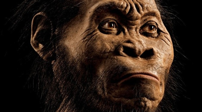 New species of Homo discovered in South Africa