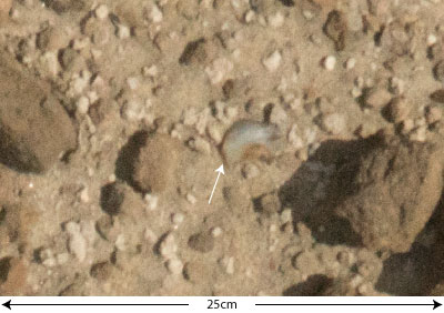 a quartz flake