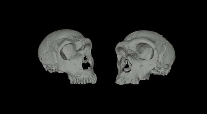 Convergent Adaptation of Noses in Neanderthals and Modern Humans
